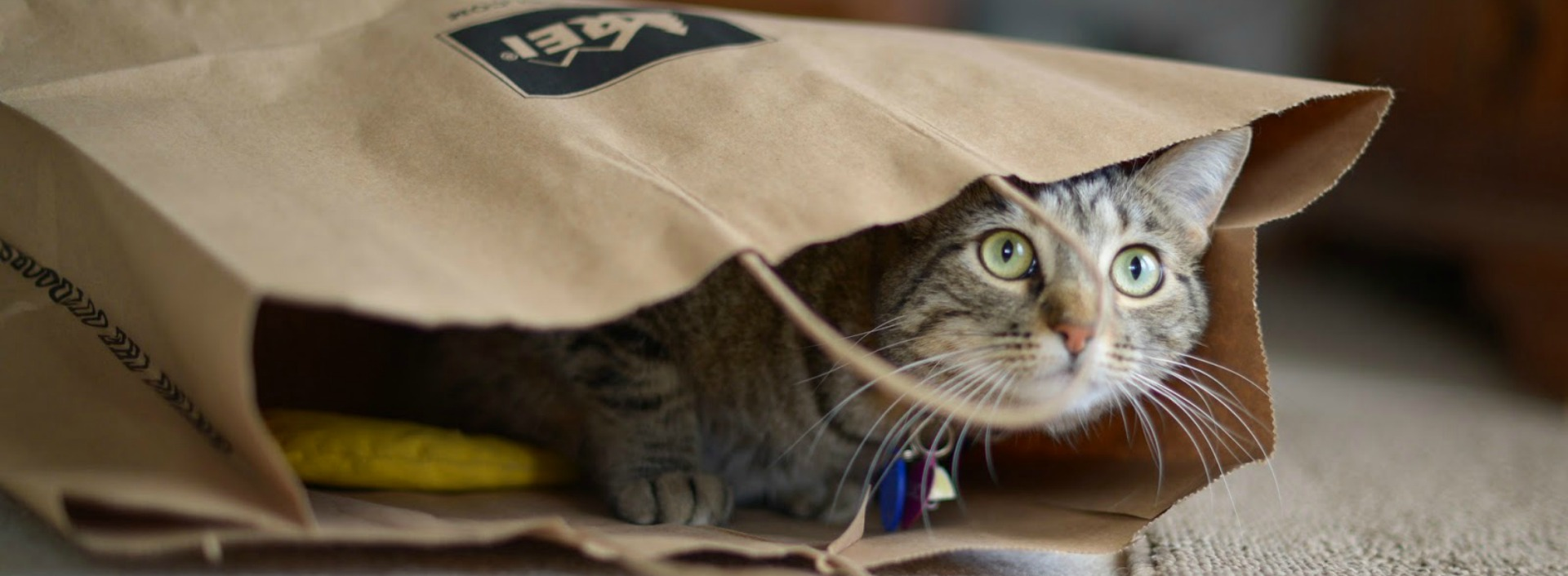 English idioms you should learn: A cat looks out of a paper bag