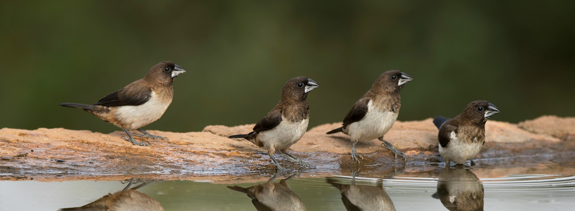 English Proverb: Birds of a feather flock together. Several birds sitting together on a log on a lake.