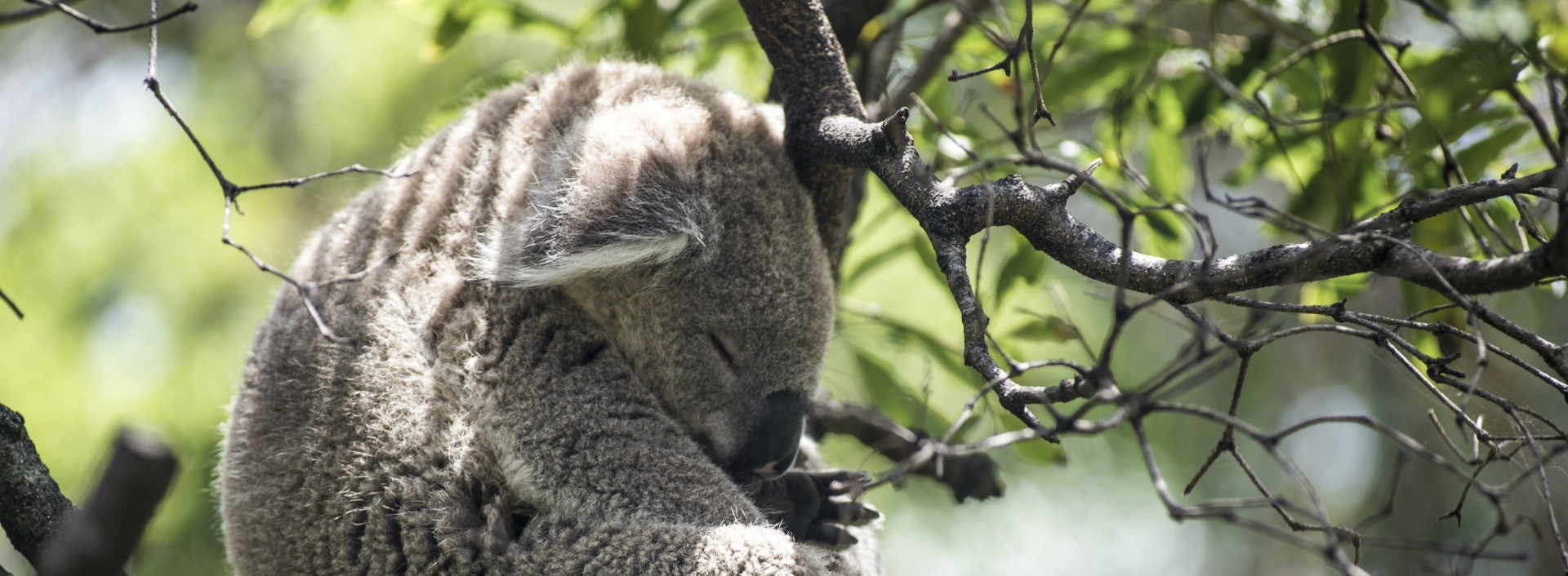A koala is zonked and has crashed on a tree branch are two examples of slang words