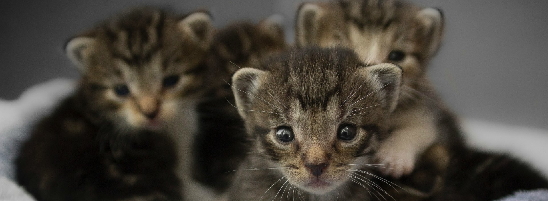 A litter of kittens is an examples of collective noun.