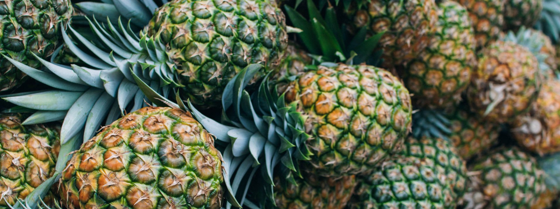 Close up of some and any pineapples.