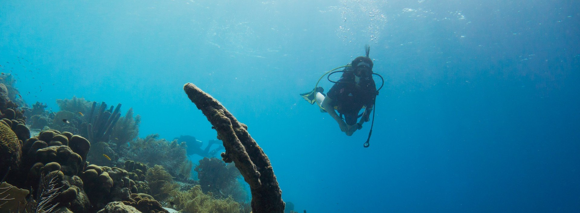 Words that are actually acronyms: A person scuba dives in clear blue water and looks at a shipwreck.