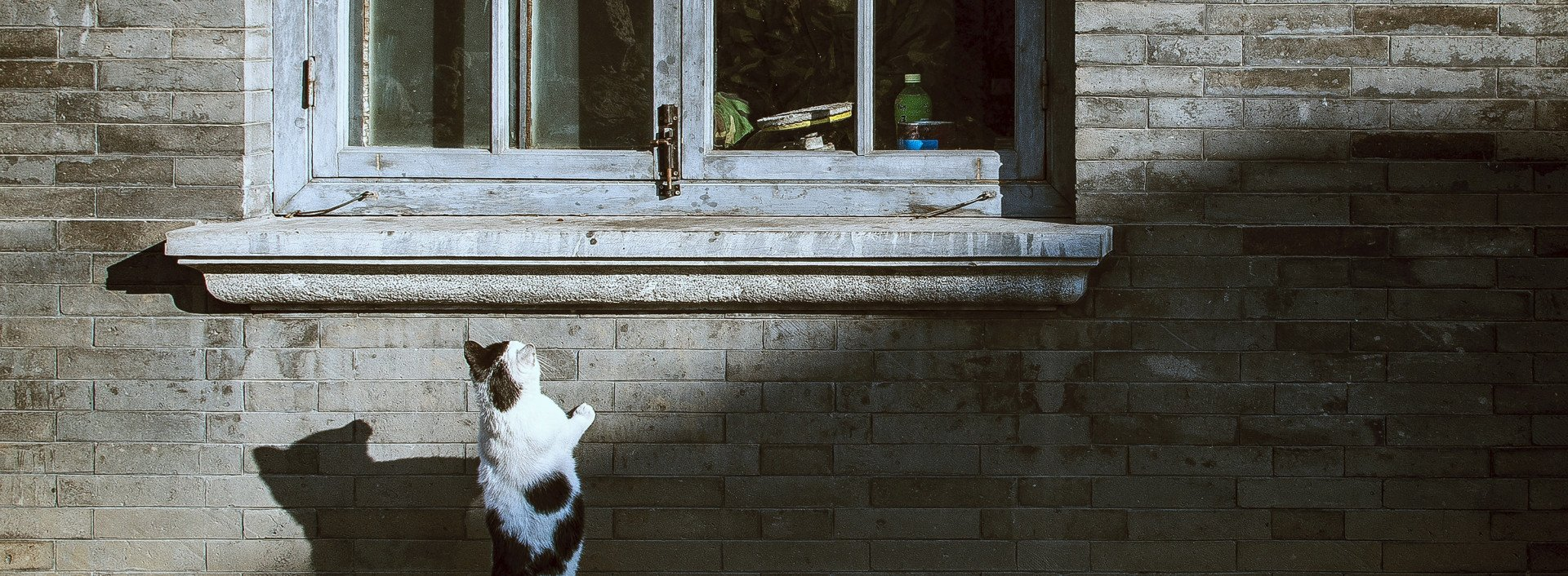 "Endings of common idioms: A spotted cat looks up through a window on the street, bringing to mind the idiom ""curiosity killed the cat."""